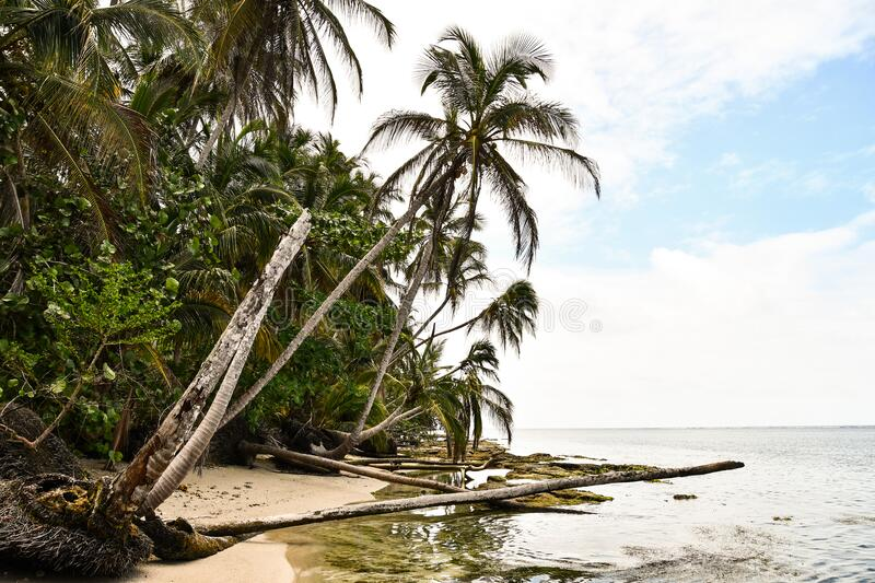 Tropical beach and sea, in costa rica central america. Tropical beach and sea, photo as a background, digital image stock photos