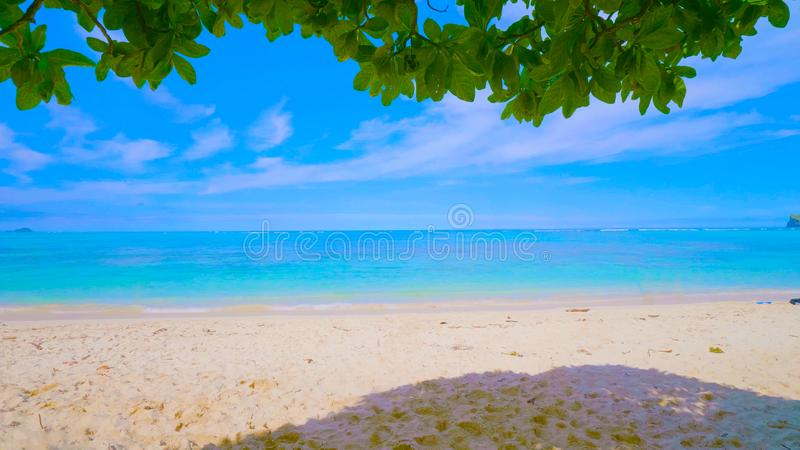 Tropical beach and sea in hawaii 2019 stock image