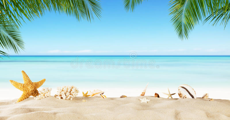 Tropical beach with sea star on sand, summer holiday background. royalty free stock images