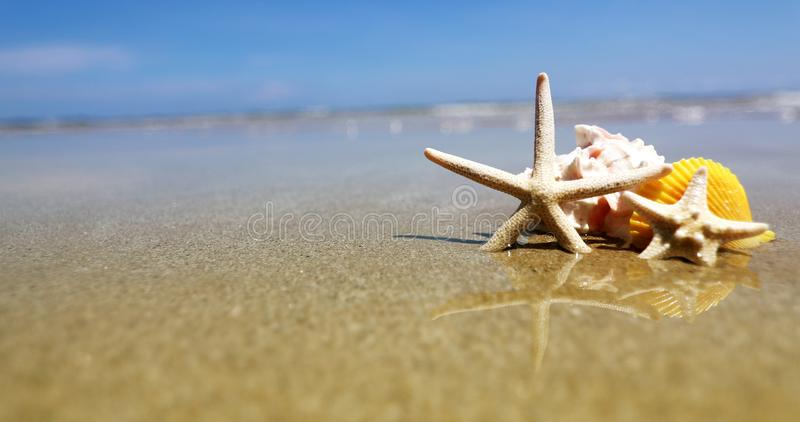 Tropical beach with a seashells and starfish for summer holiday stock photo