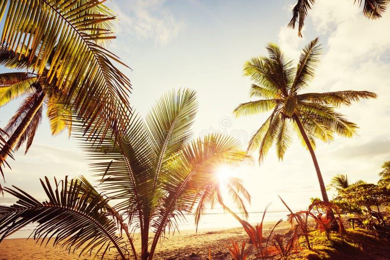 Tropical beach. Serenity on the tropical beach royalty free stock photo