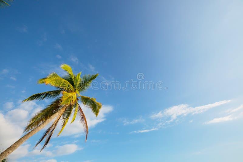 Tropical beach. Serenity on the tropical beach stock photos