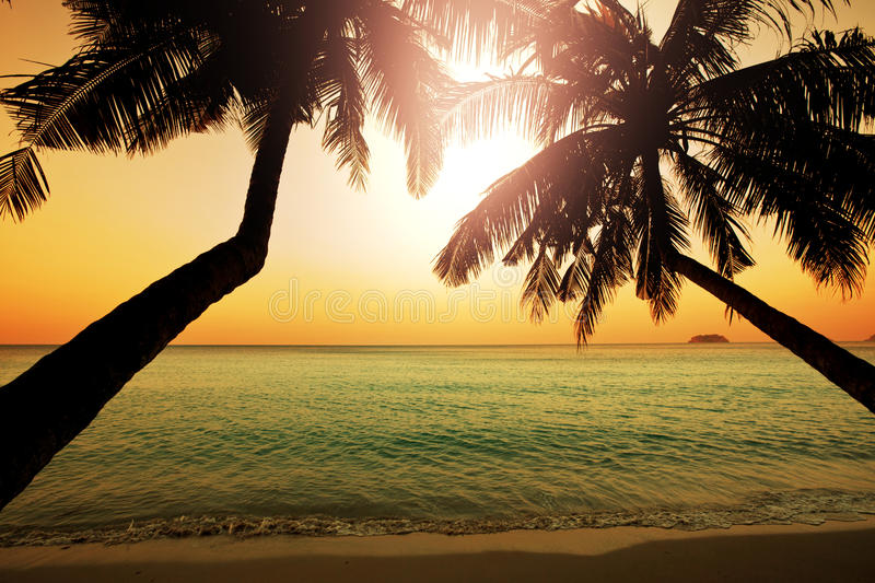 Download Tropical beach stock photo. Image of shore, coast, dusk - 32007988