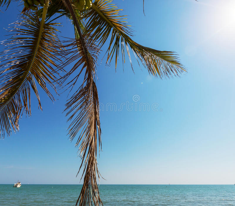 Download Tropical beach stock image. Image of silhouette, beach - 32008009
