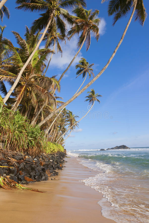 Tropical beach in sri lanka, galle district stock image