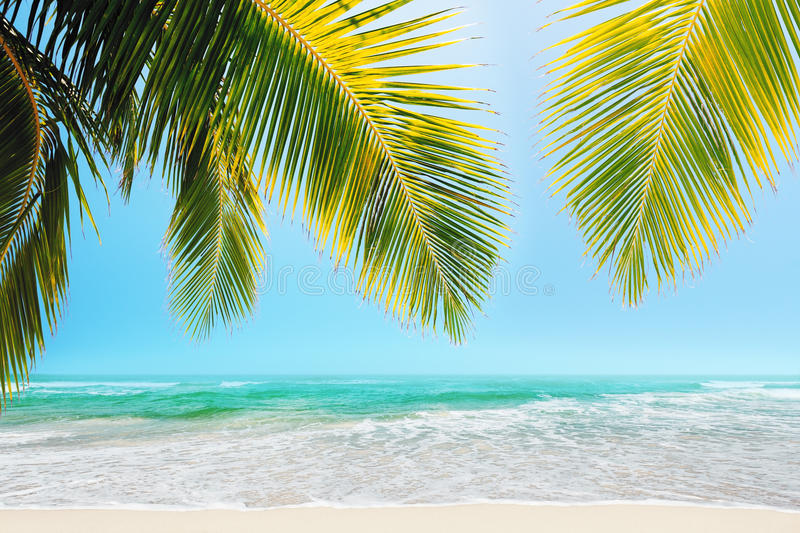 Download Tropical beach stock photo. Image of relaxation, peaceful - 29863762
