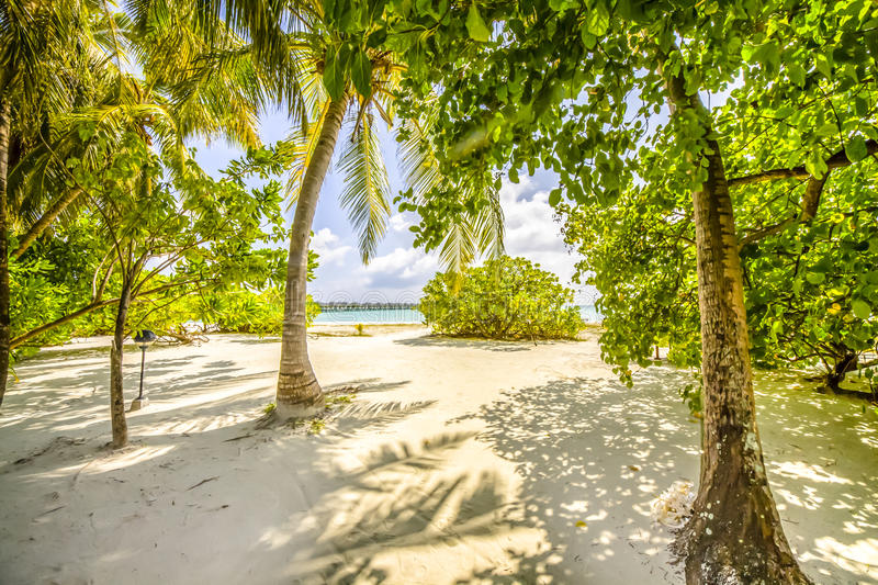 Tropical Beach With Trees Stock Photo