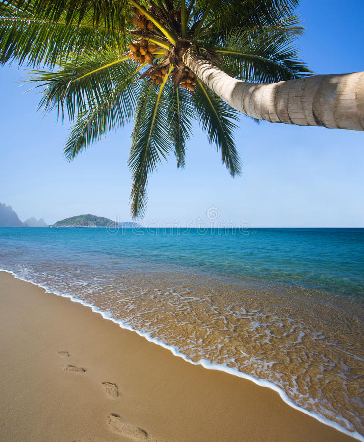 Download Tropical beach stock image. Image of resort, coconut - 39364735