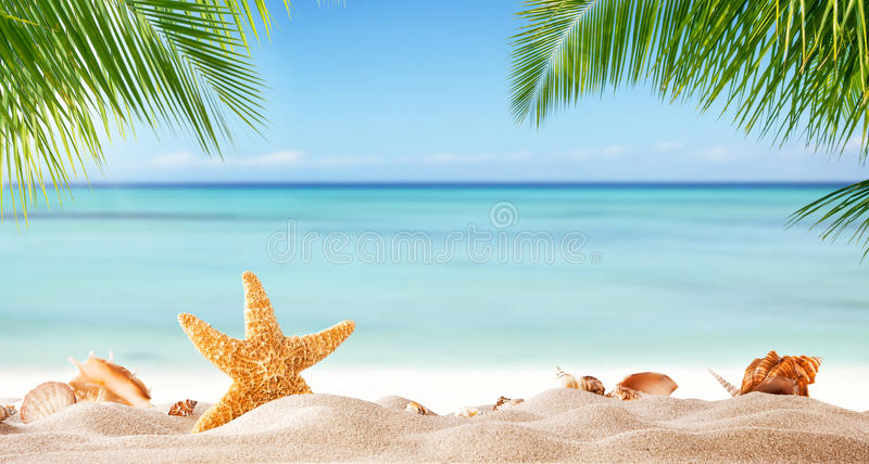 Tropical beach with various shells in sand royalty free stock image
