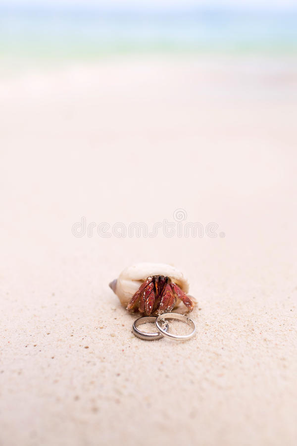 Download Tropical Beach Wedding stock photo. Image of rings, love - 23638334