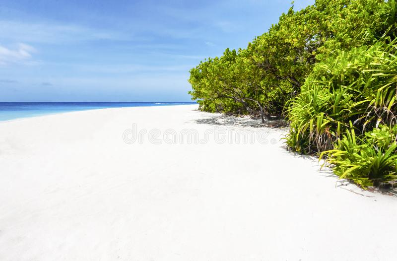 Tropical beach with white sand in Maldivian island. Tropical beach with white sand and mangrove plants in Maldivian island royalty free stock photography