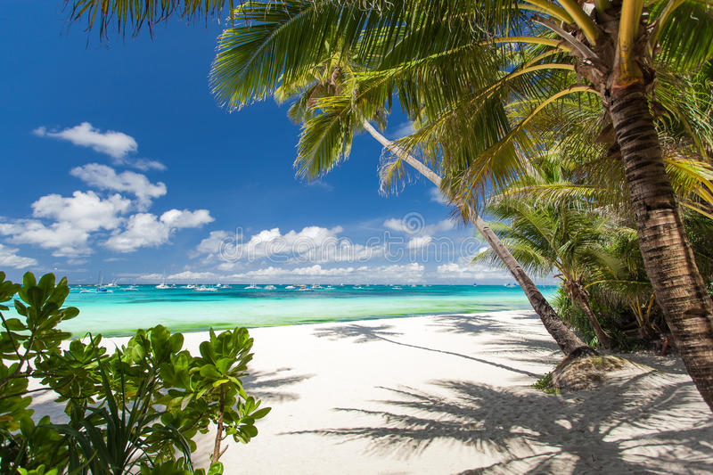 Tropical beach with white sand royalty free stock image