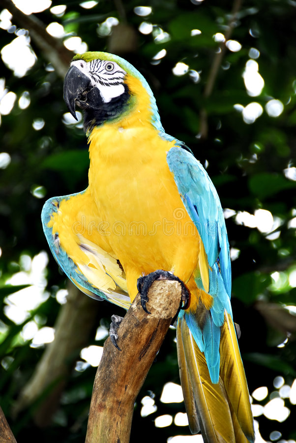 Free Tropical Bird Royalty Free Stock Photography - 2446887