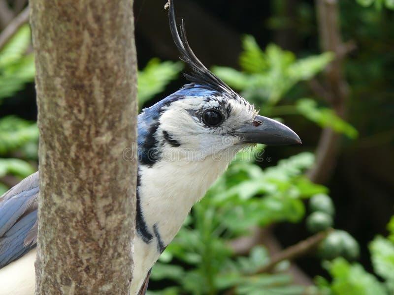 Download Tropical bird stock image. Image of nicaragua, tucan, bird - 9147537