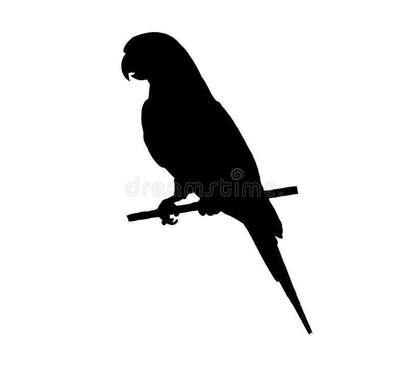 Tropical bird. silhouette stock image