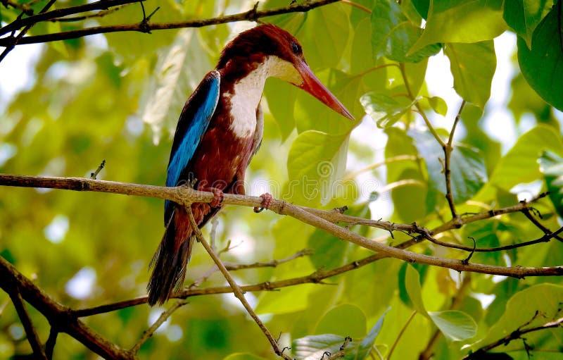 Tropical Bird In Tree Free Public Domain Cc0 Image