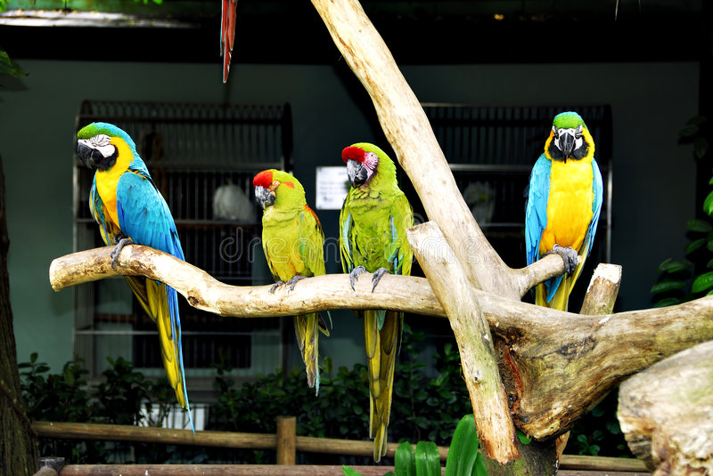 Tropical birds royalty free stock photos