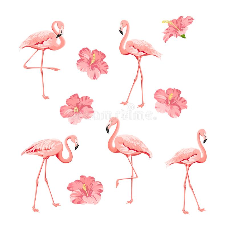 Tropical birds and flowers collection. Pink flamingos set. Hibiscus flowers kit. Fashion tropic bundle. Elements for stock illustration