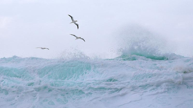 Tropical birds soar above the waves stock images