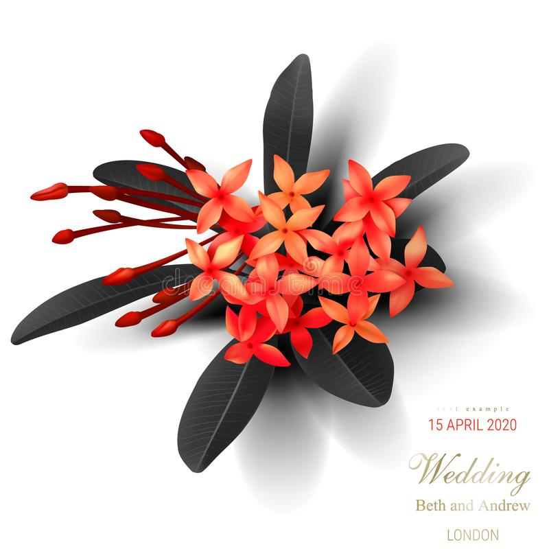 Free Tropical Black Leaves And Exotic Red Flower Stock Photo - 147343540