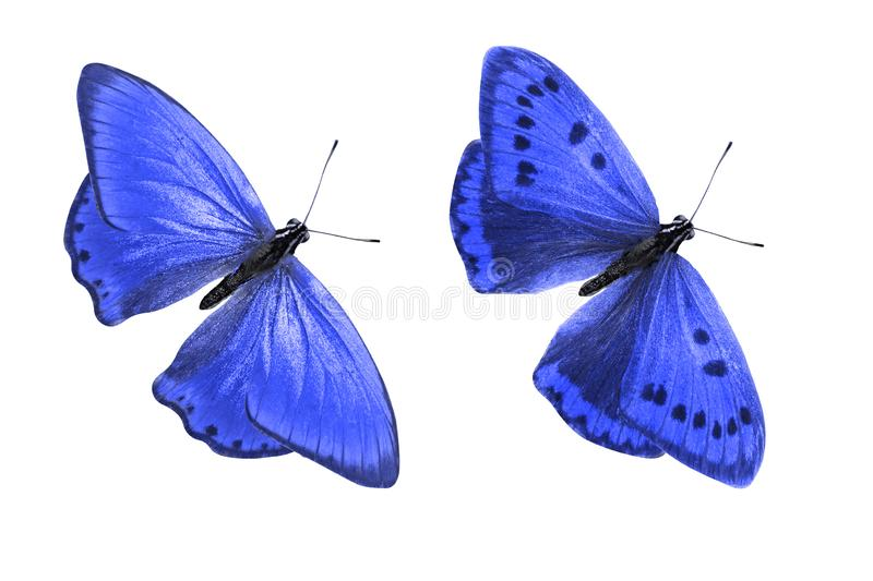 Tropical blue butterfly. isolated on white background. Two blue butterflies. on a white background vector illustration