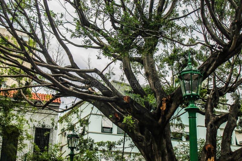 Tropical bonito das férias sagrados antigas da árvore fotos de stock