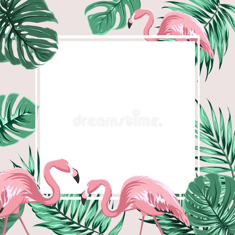 Tropical border frame banner leaves flamingo birds vector illustration