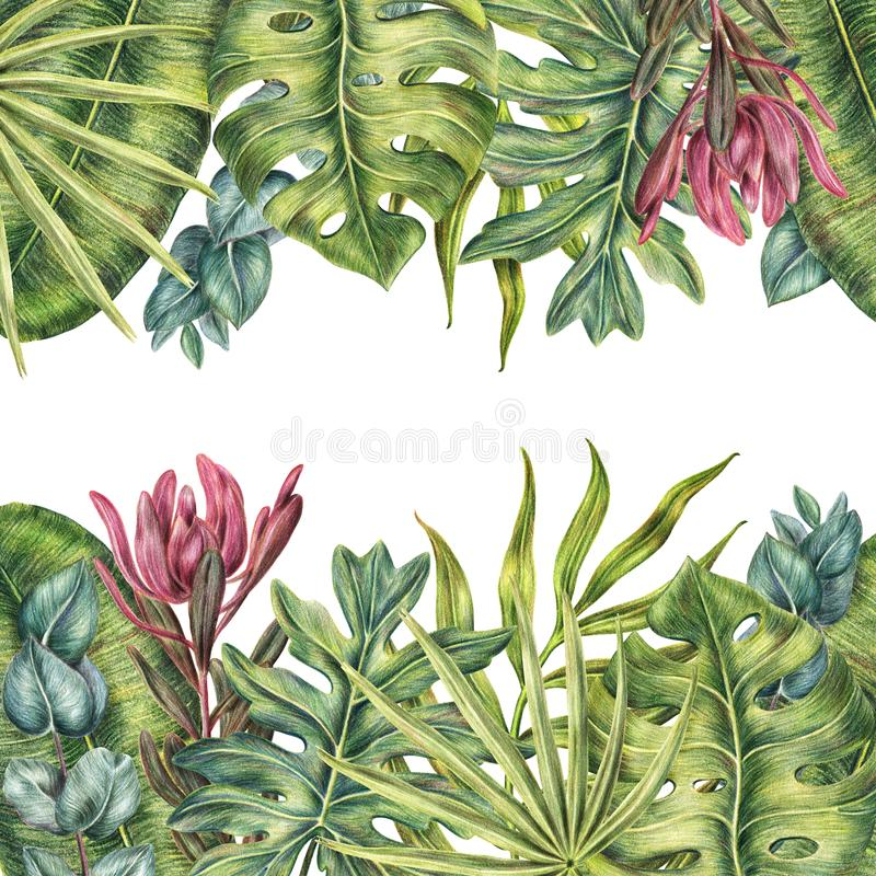 Tropical border with palms leaves, top and bottom stock illustration
