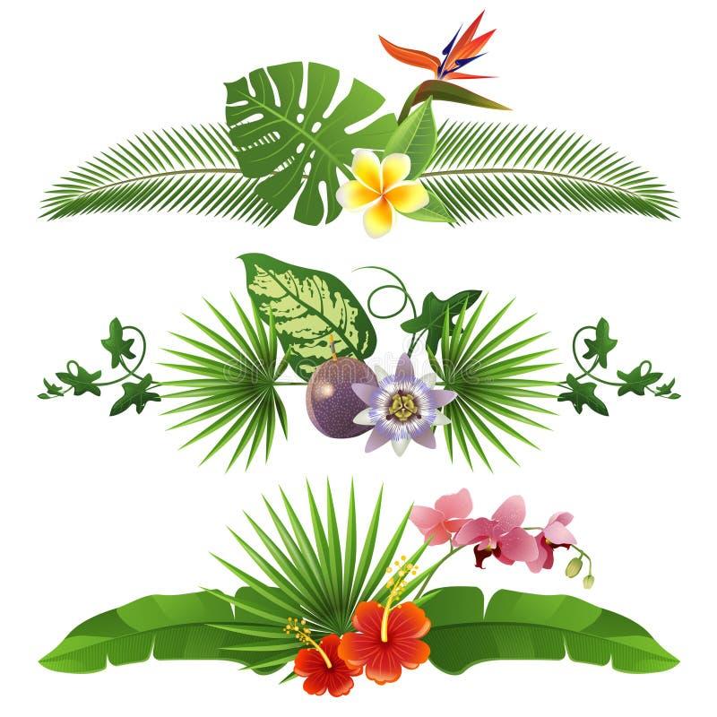 Tropical borders vector illustration