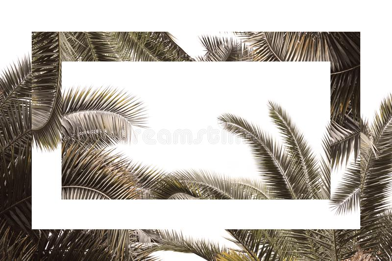 Tropical branches of palm trees on a white background, in vintage colors with mirror reflection, surreal composition απεικόνιση αποθεμάτων