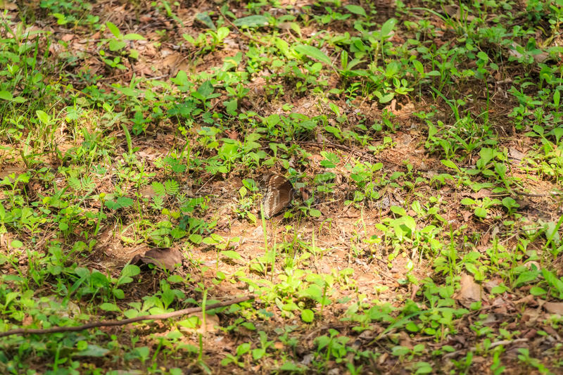 Download Tropical Brown Butterfly Hides In Grass Stock Image - Image: 89904521