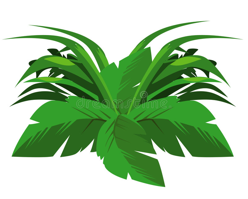 Download Tropical bush stock illustration. Image of fern, silhouette - 4732996