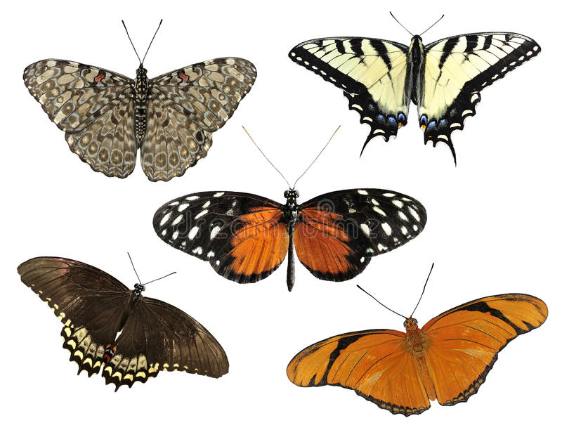 Tropical Butterflies. Isolated On White Background stock photo