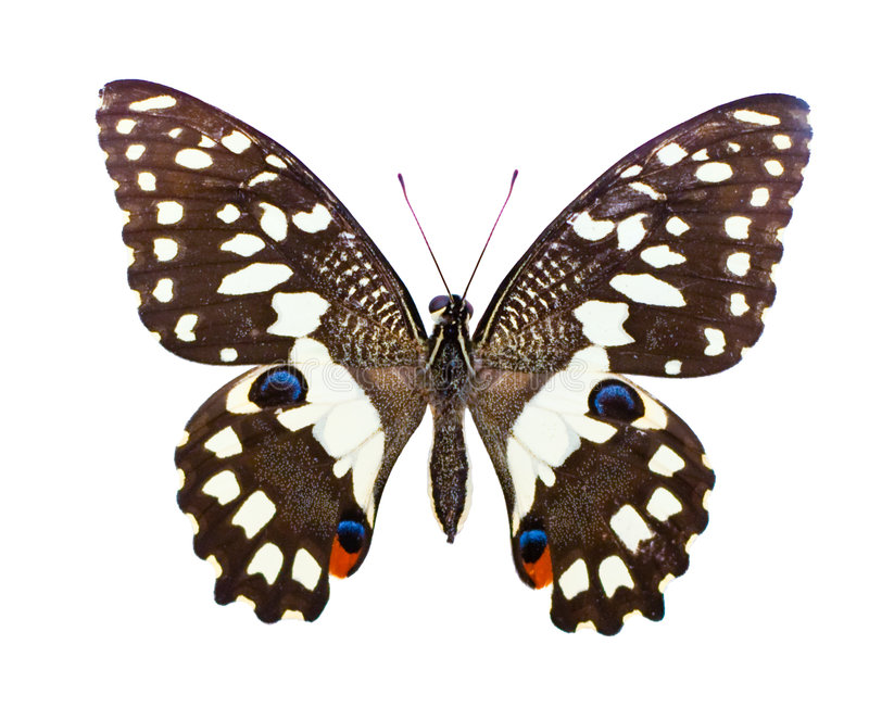 Tropical butterfly stock photos