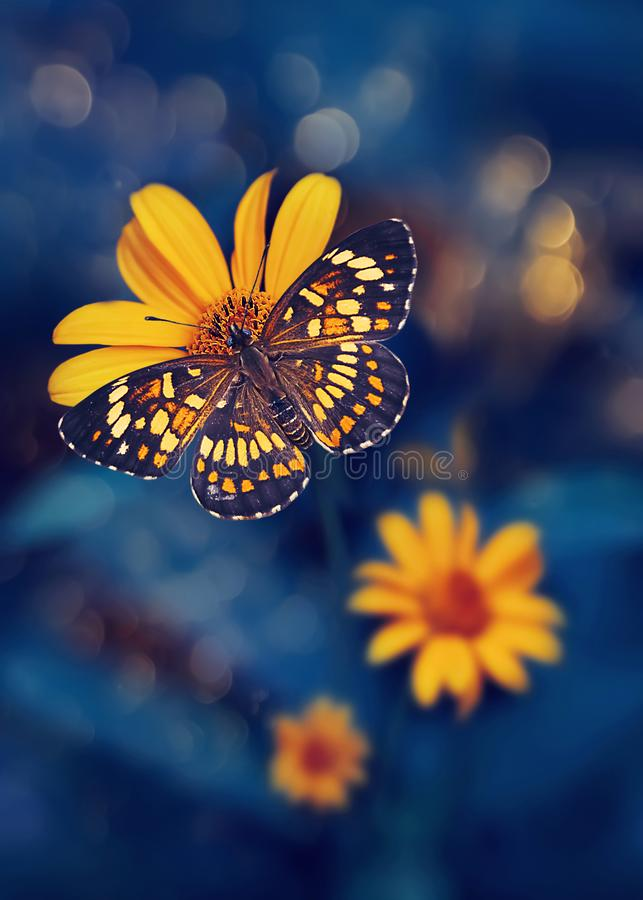 Free Tropical Butterfly And Yellow Bright Summer Flowers On A Background Of Blue Foliage In A Fairy Garden. Macro Artistic Image. Royalty Free Stock Photo - 165648135