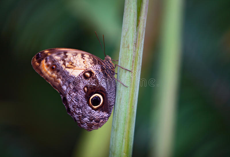 Tropical butterfly closeup