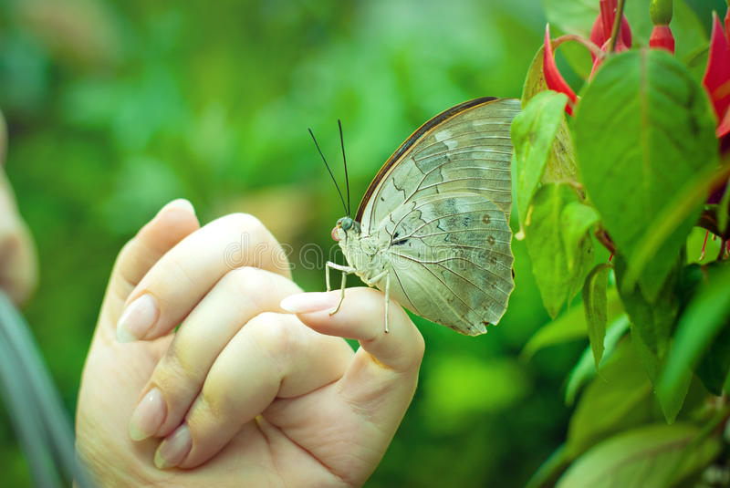 The tropical butterfly sits on a hand stock image