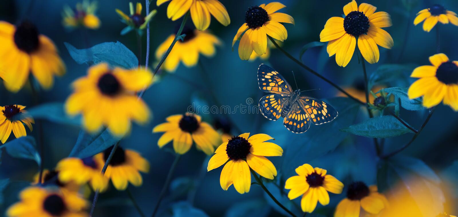 Tropical butterfly and small yellow bright summer flowers on a background of blue foliage in a fairy garden. royalty free stock photography