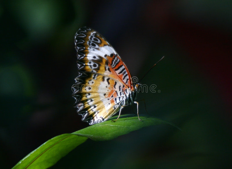 Tropical butterfly on spot light stock images
