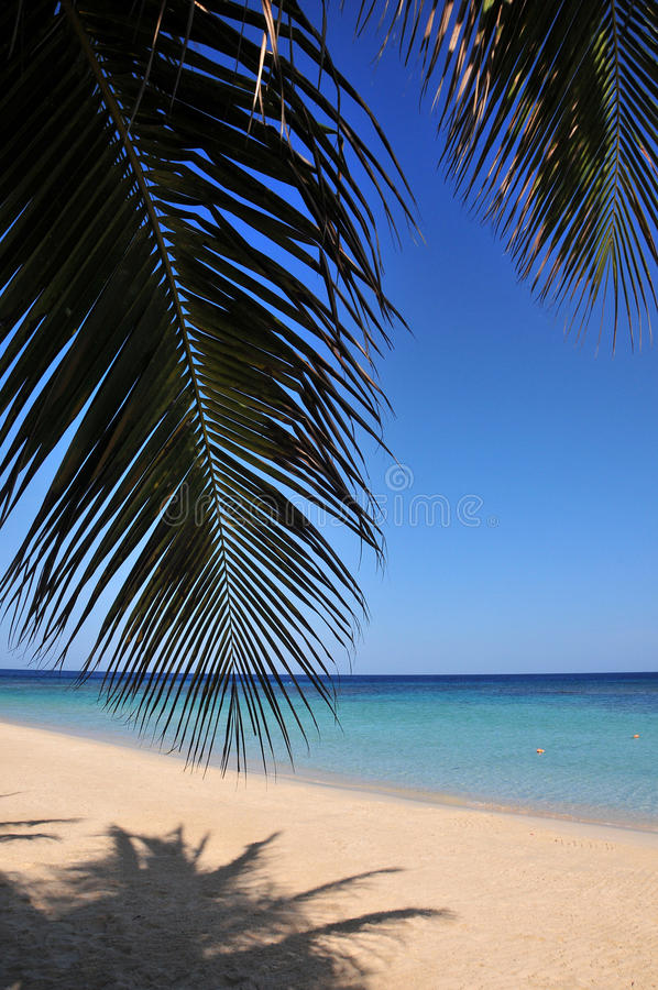 Free Tropical Caribbean Beach Stock Images - 14359904