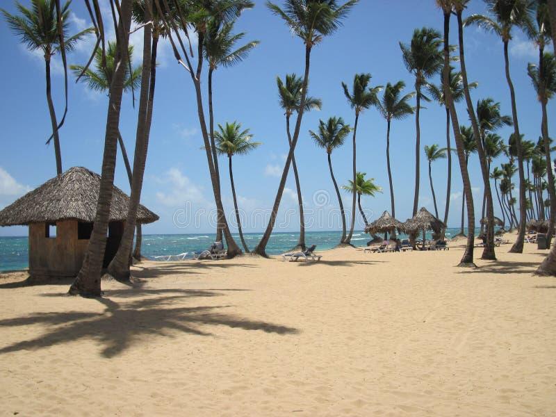 Tropical Caribbean Beach royalty free stock image