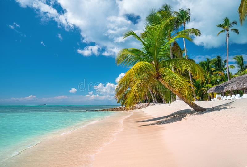 Tropical caribbean island Saona, Dominican Republic. Beautiful beach, palm trees and clear sea royalty free stock images