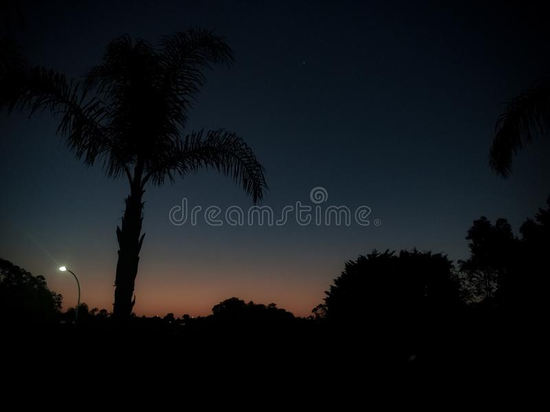 Tropical claro da noite foto de stock