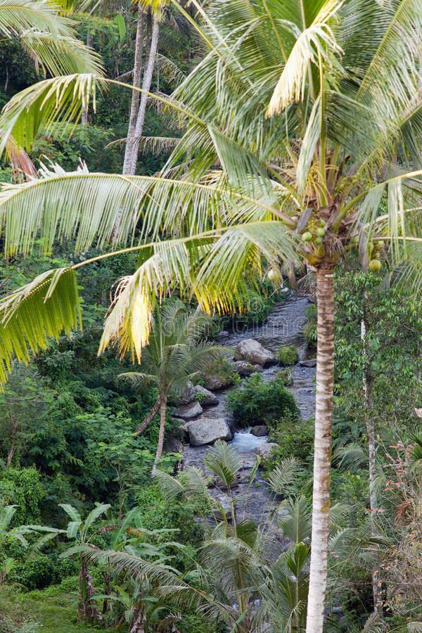Tropical climate in Bali island stock images