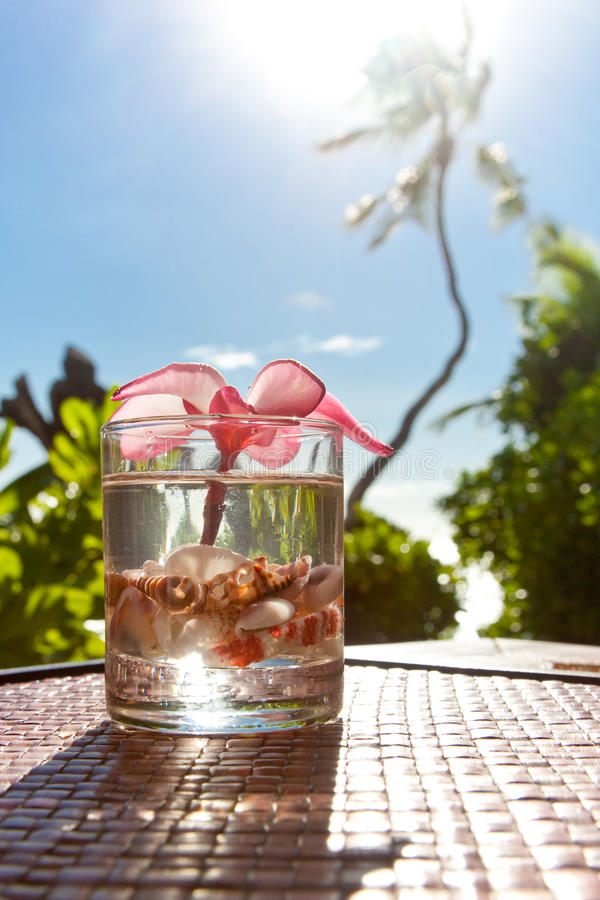 Tropical cocktail royalty free stock photography
