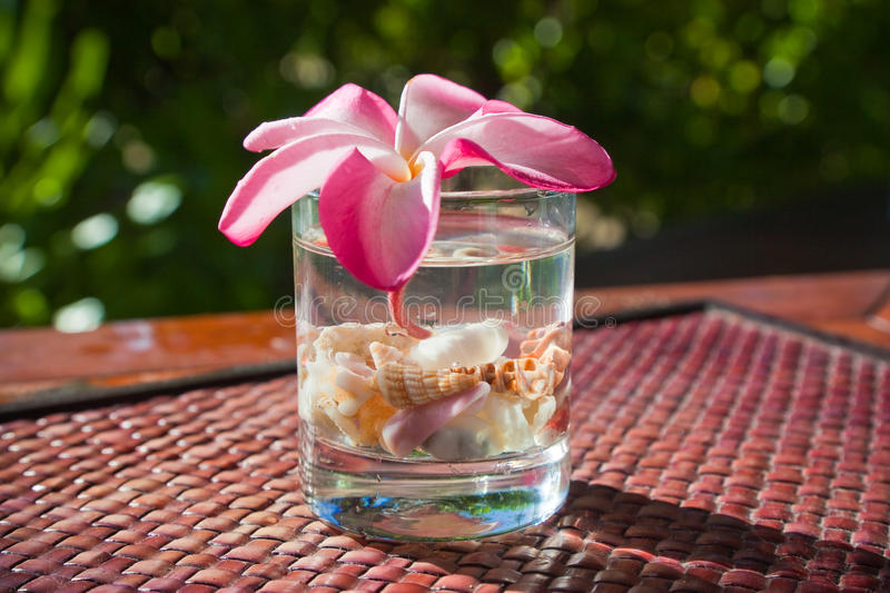 Tropical cocktail topped with flower stock photography