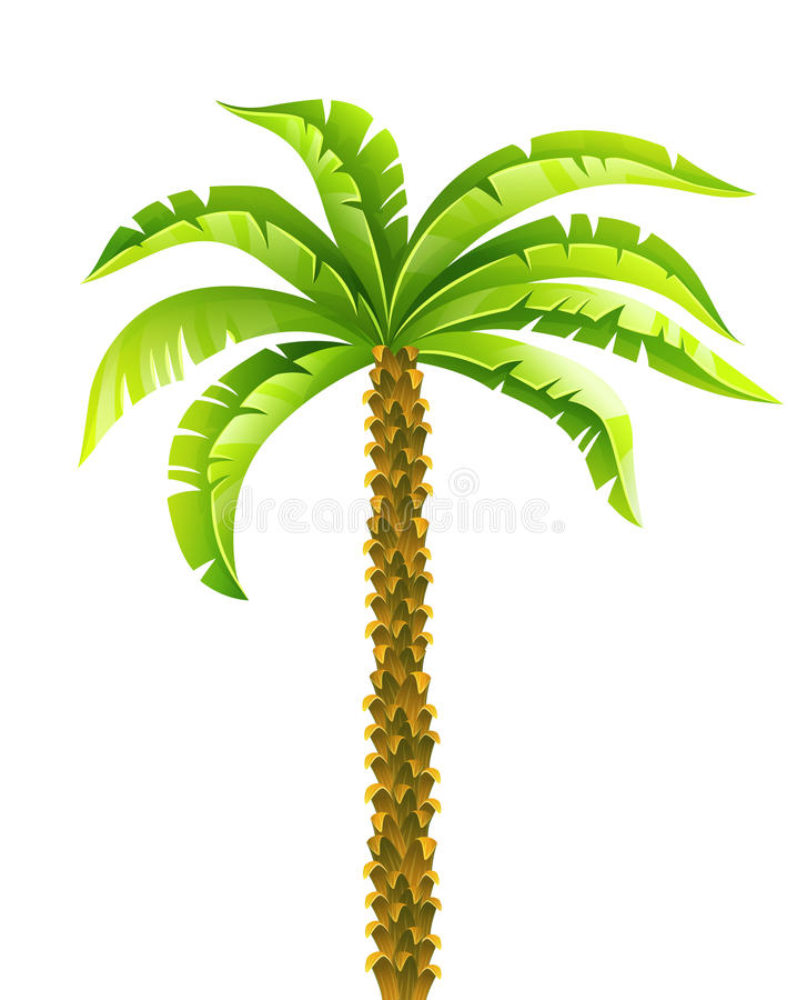 tropical coconut palm tree with green leaves vector illustration rh dreamstime com palm tree leaves vector png palm tree leaves vector free