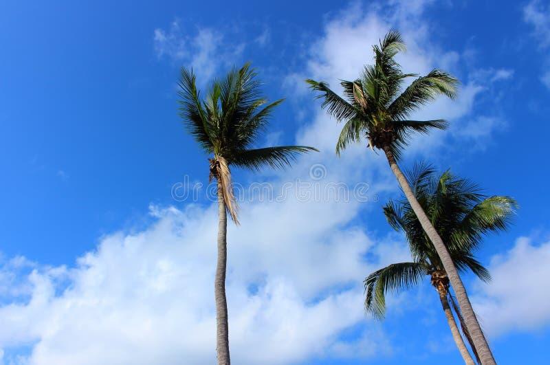 Palm on the blue sky background stock photo