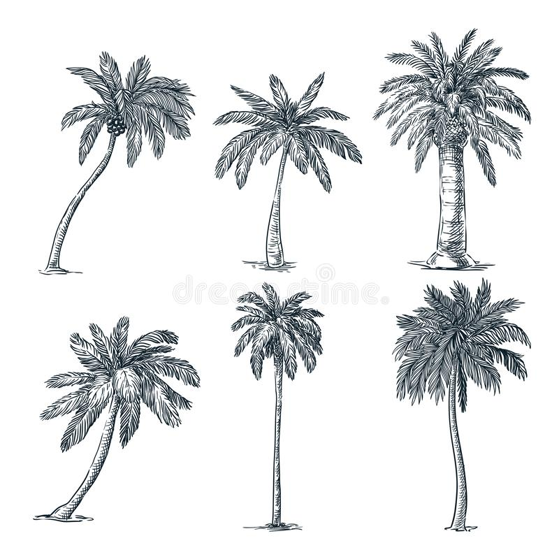 Tropical coconut palm trees set. Vector sketch illustration. Hand drawn tropical plants and floral design elements. Tropical coconut palm trees set, isolated on stock illustration