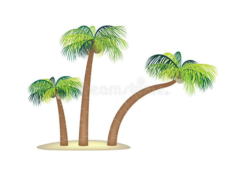 Coconut palm trees small tropical island